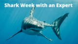 """A Great White Shark and title """"Shark Week with an Expert"""""""