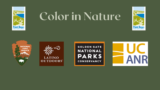 Color in Nature webinar partner logos