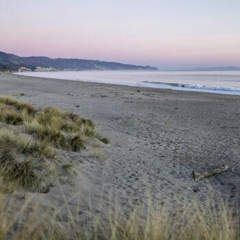 sand dunes with European beach grass