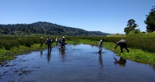 Students exploring a wetland