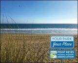 The beach with European beach grass