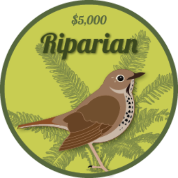 A graphic of a Swainson's Thrush standing in front of a fern