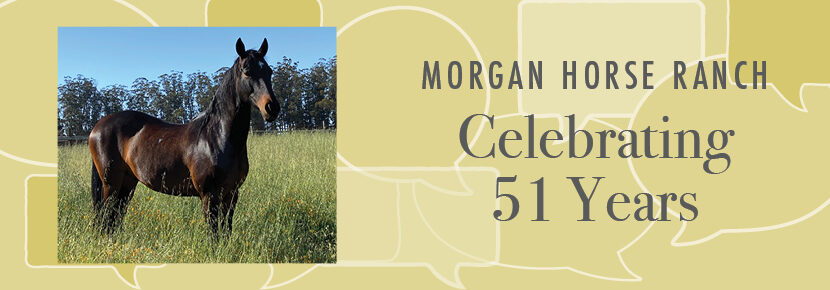 Morgan Horse Ranch Celebrating 51 Years graphic with a horse
